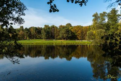 Кузьминский лесопарк пруд природа пейзаж осень