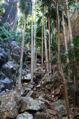 Пальмовое ущелье Австралия