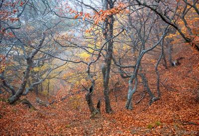 Осенний танец Демерджи Крым Демерджи гора горы осень лес бук буковая роща долина приведений туман танец деревья осенняя листва