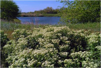 Полевые придорожные цветы возле пруда. Волгоград пруд цветы поле весна жара