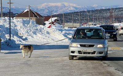 На прогулке собаки авто техника зима прогулка море Охотское