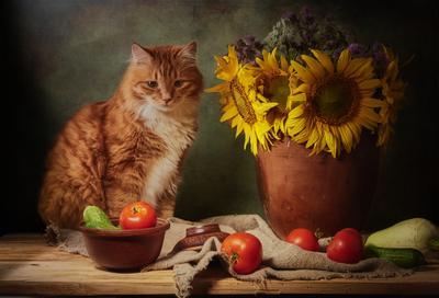Рыжий кот и подсолнухи. натюрморт постановка композиция сцена кот питомец любимец рыжий подсолнухи
