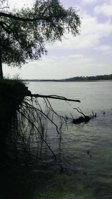 На берегу берег вода река корни