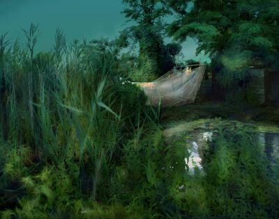 сети рыбацкая сеть, невод, камыш, деревья, озеро, болото, трава