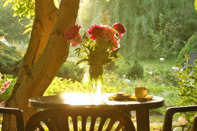 Утро в саду. природа лето утро сад букет пионы