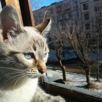 *** кошка весна