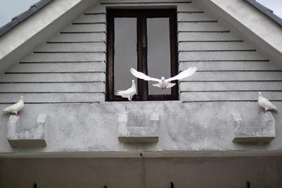 Первый пошел! голуби, Хайнань