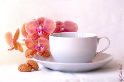 *** орхидеи кофе чашка печенье CatSteel