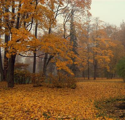 Золото Осени..