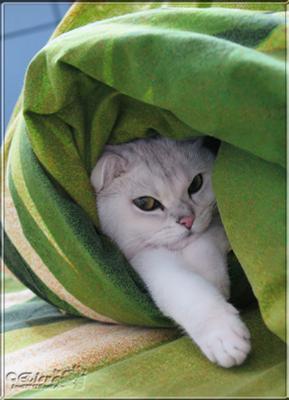 Кот в одеяле... животные кошки