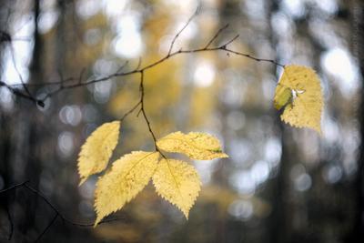 *** пасмурный лес осенняя листва