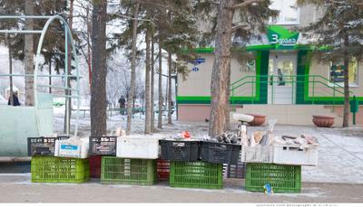 рыба Омск, 2008