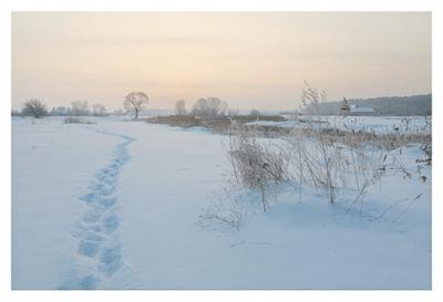 Были птички - поклевали... утро зима мороз иней