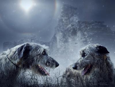 If Ireland Back To The Irish Digital Photo Art Irish Wolfs Eltons Fantasies