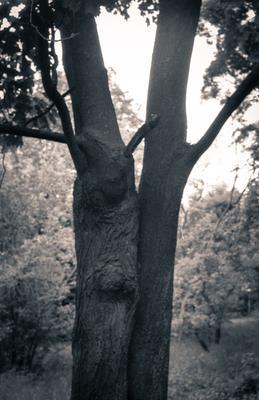 2 дерева деревья природа свет монохромный ясинский фактура