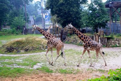 Рижский зоопарк