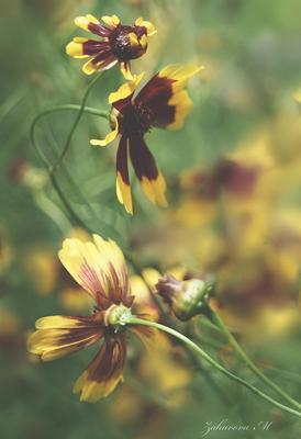 *** цветы