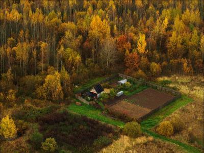 уголок дом лес осень