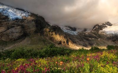 Лёд  и Цветы утро горы цветы ледники Кавказ