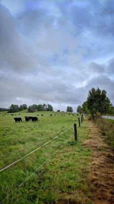 *** Природа зелень пастбище коровы животное
