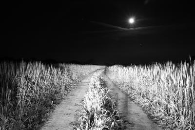 Дорога в... ночь поле луна черно-белое