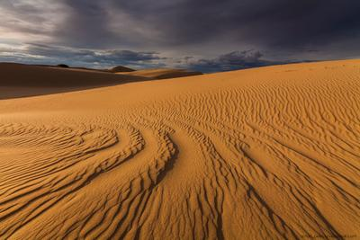 Следы на песке Монголия Гоби пустыня закат