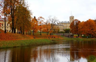 Гатчинский дворец Гатчина дворец дворец-музей парк