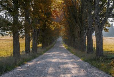 Старая дорога