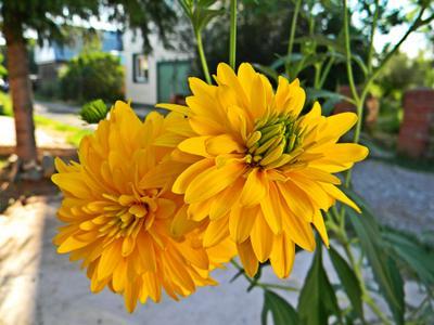 Желтые цветы Цветы лето макро близко