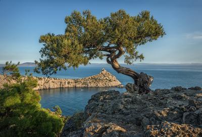 *** Новый Свет Крым можжевельник октябрь море Капчик скала