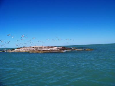 Чайки на острове