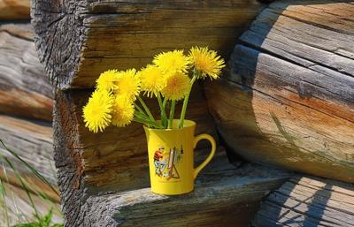 ***Деревенские цветы природа цветы деревня