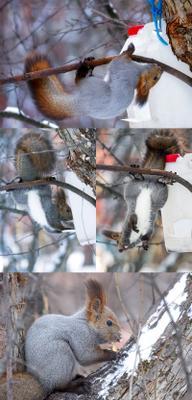 Без смекалки и труда не съешь орешку никогда! белка кормушка Сибирь зима Красноярск
