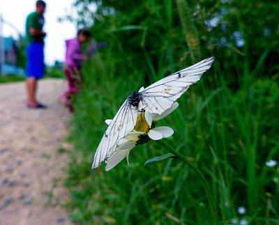 Время прекрасного скоротечно... Бабочка ромашка лето макро