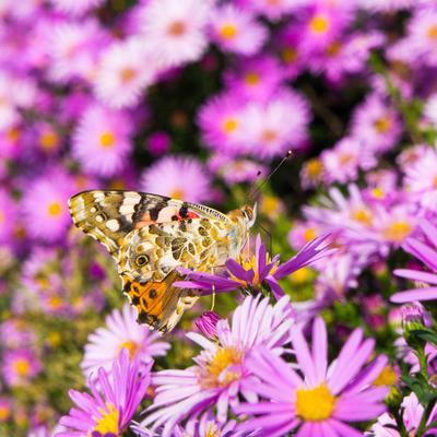 *** бабочка цветок природа флора фауна