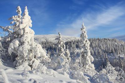 *** зима, горы, снег, лес, пейзаж, природа, кандалакша, поход