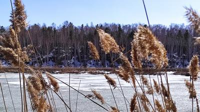 Весна на озере 3 весна озеро лед снег лес камыши