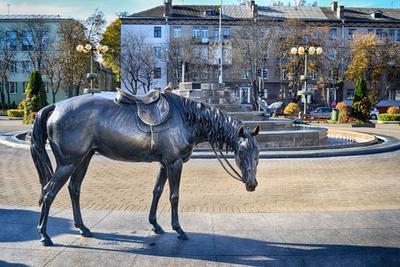 Лошадь и воробей Минск