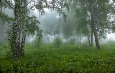 ... лето утро туман