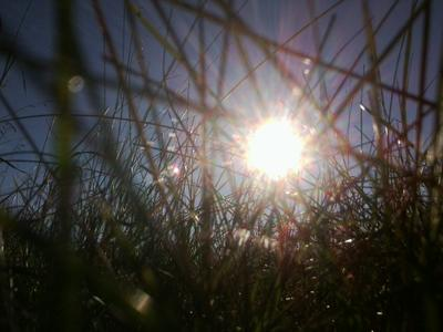 Последний теплый день. Небо солнце трава роса