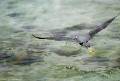 fly away птица цапля серая heron
