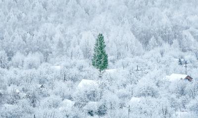 Скоро новый год!!! лес зима новый год елка