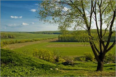 Там, внизу река Осётр природа, дерево, река, просторы, Осётр, Подмосковье, весна
