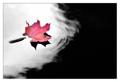 code: red лист вода осень