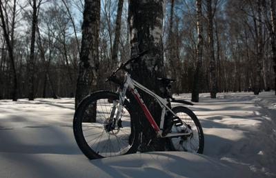 Вело-прогулка в парк Велосипед зима пейзаж парк деревья