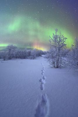 Ночь. заполярье крайний север Ненецкий автономный округ