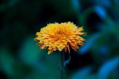Асмм Цвет глубина вечер цветок