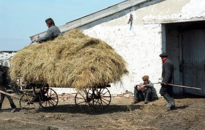 Рабочий день на ферме. лошадь стог весна сено корова молоко