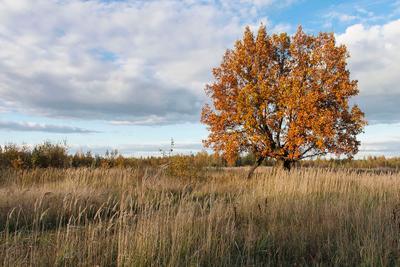 Что такое осень? Осень Подмосковье Дерево Закат