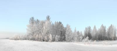 ***морозное утро